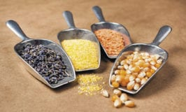 bulk beans and grains in scoops