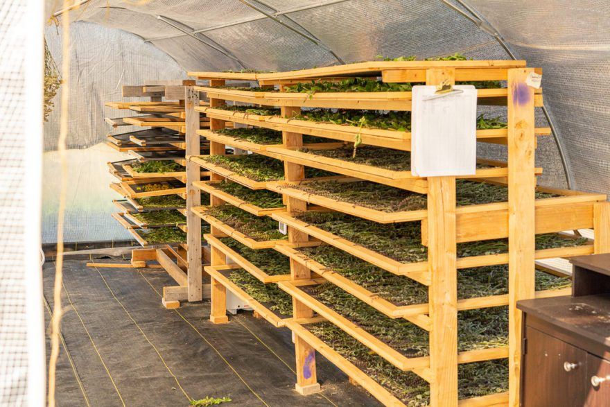 the inside of an herb drying shed